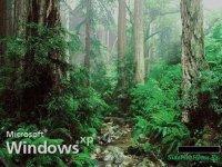 Загрузочный экран для windows - Природа!